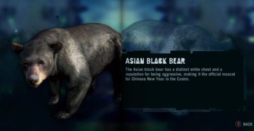 Asian_Black_Bear